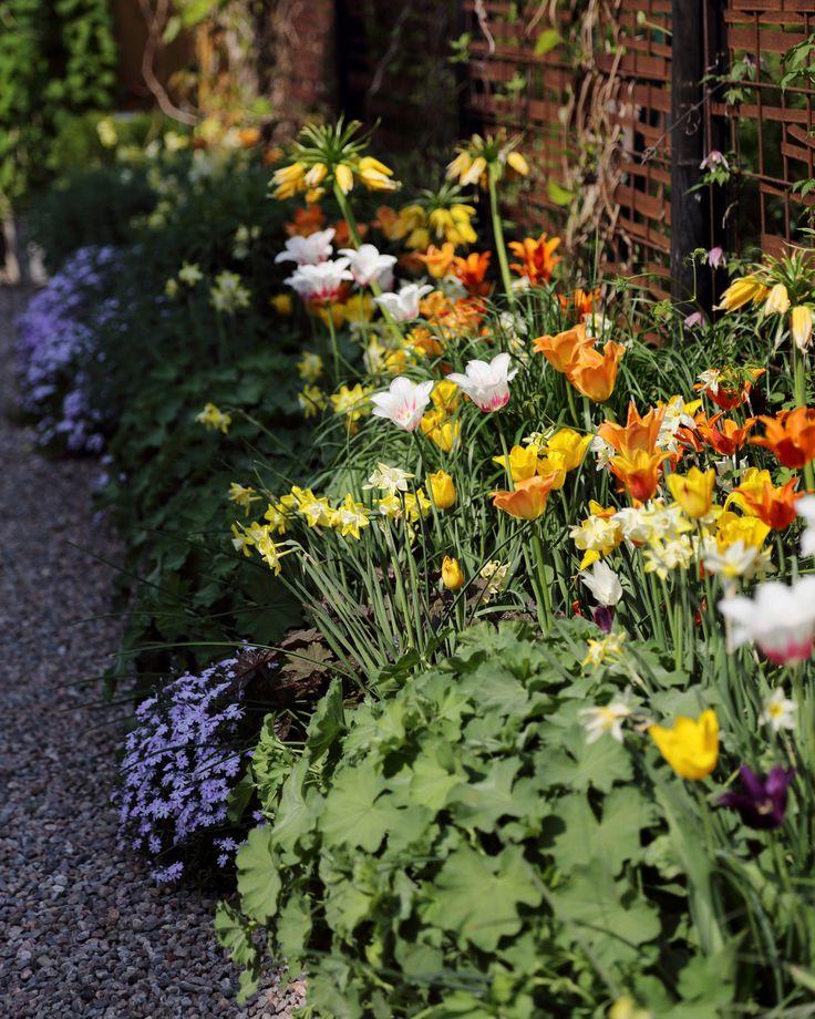 """För att skapa insynsskydd har man satt upp en spaljé av armeringsmattor där rostiga metallband flätats in. I rabatten blommar iris, gul kejsarkrona, narcisser och olika tulpansorter / När hon planerar en tulpanrabatt tänker hon inte bara i färger utan väljer också flera sorter med olika blomningstider för att få så utdragen tulpanblomning som möjligt. """"Jag tänker naturligtvis också i färger, att det är olika nyanser av en färg, till exempel från ljust rosa till violett."""""""