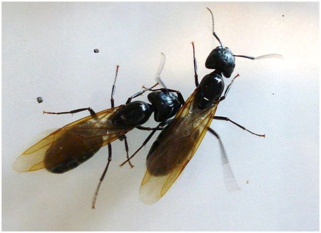 The 25 Best Flying Ants In House Ideas On Pinterest  Small Flies Cool Small Insects In Bathroom Decorating Inspiration