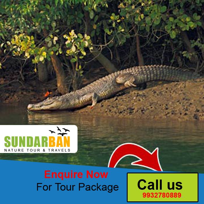 Sundarban is the #world biggest #mangrove #forest. In #Bangladesh tourism, Sundarban plays the most vital role.#Sunderban #Tour #Packages, #Tour #Operator in sundarban, sunderbans package tour, tour and #travel #agency in Sundarban, #cheap tour package sundarban Suraj Das Mob :- 9932780889.