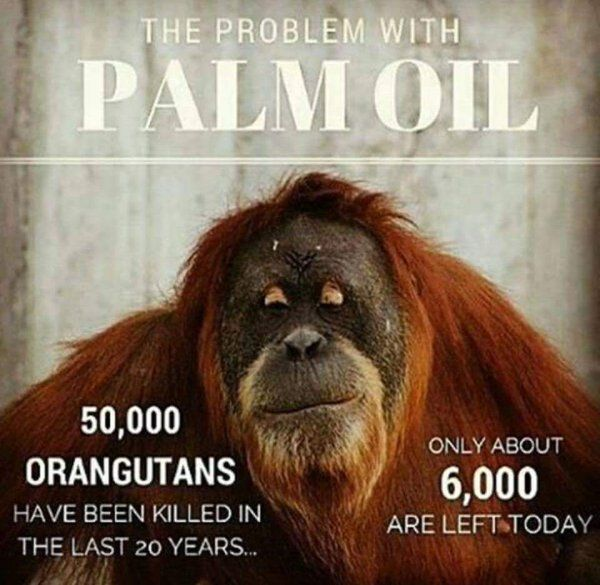 The problem with palm oil. is that it usually is sourced from the deforested regions. We innocently buy a lot of products with palm oil content - now is the time to refrain from doing so. It's costing threatened species their only real home ! We all must play a part in saving these precious rainforests !