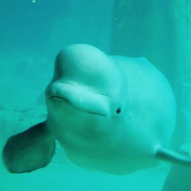 2012 tb and still a cutie🐬
