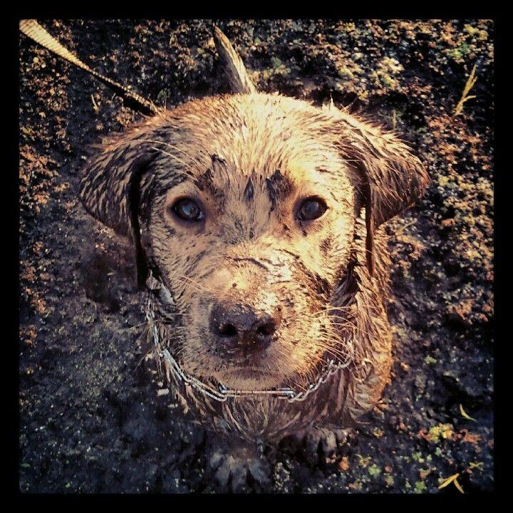 25+ best ideas about Duck hunting dogs on Pinterest ...  25+ best ideas ...