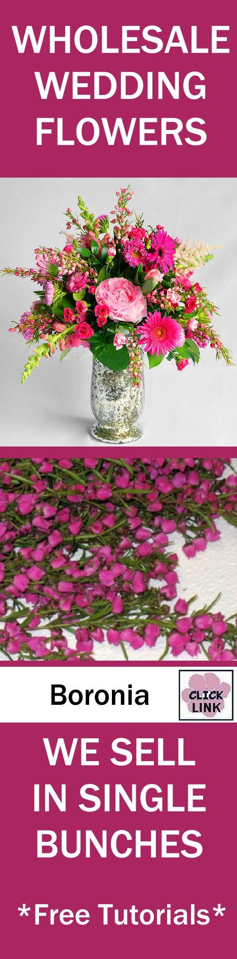 Wedding Flowers Wholesale - Boronia Heather  - Dainty hot pink buds cluster heavily on a grassy stem.  See tips from professional wedding florist on buying wholesale flowers online.  Free tutorials.