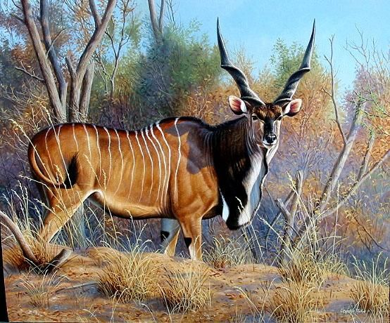 """""""Out In The Open--Lord Derby Eland"""" by Cynthie Fisher -The Agony and the Ecstasy--Hunting Giant Eland in the C.A.R."""