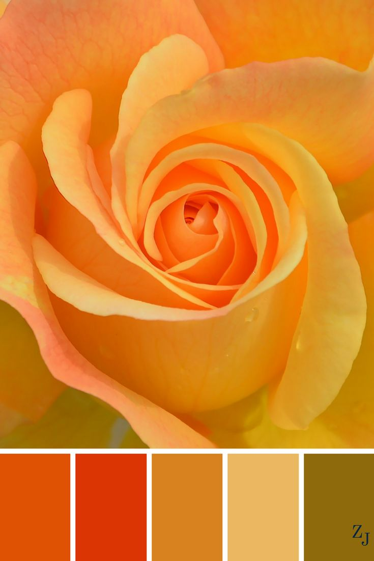 ZJ Colour Palette 570 #colourpalette #colourinspiration