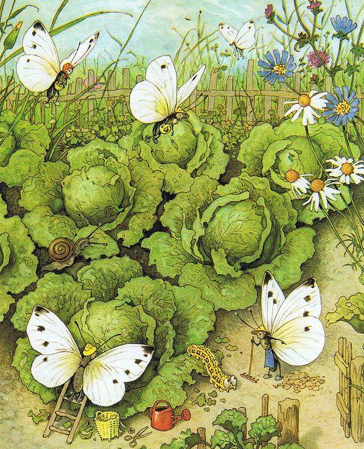 Praatplaat rupsen en vlinders