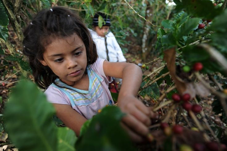 child labour essay - Yahoo Image Search Results