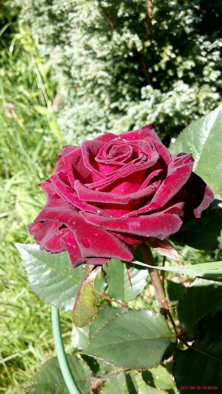 Pin De Mika Ella Em Guller Belas Flores Jardins Bonitos Belos Jardins