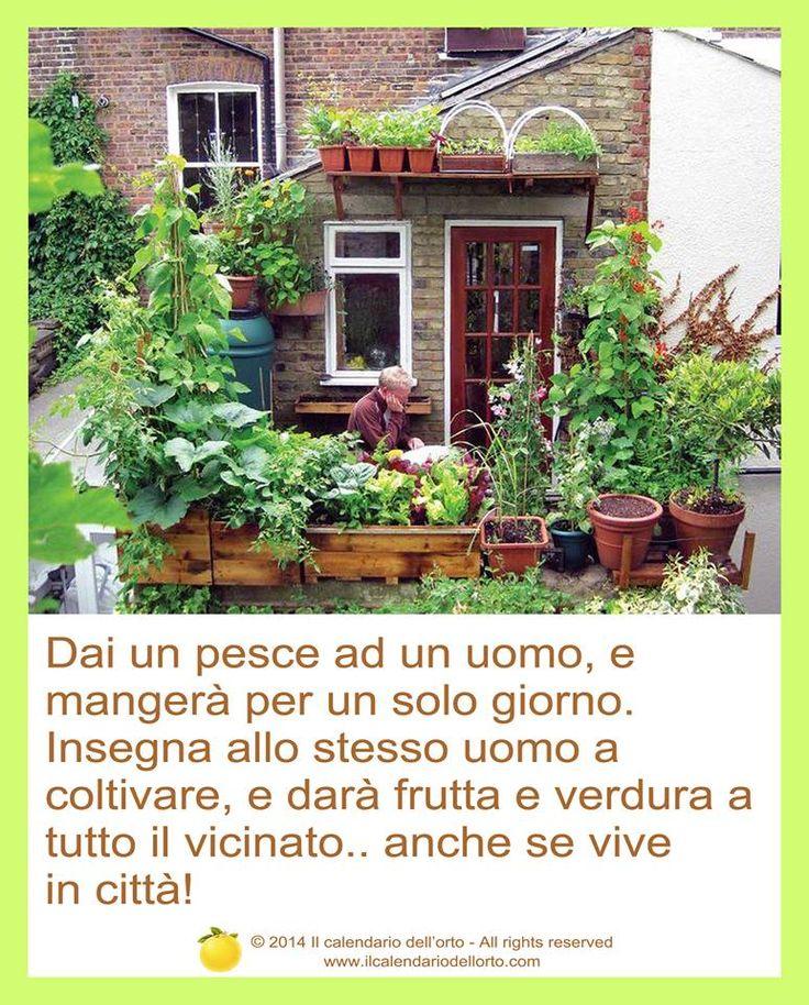 Dai un pesce ad un uomo, e mangerà per un solo giorno. Insegna allo stesso uomo a coltivare, e darà frutta e verdura a tutto il vicinato... anche se vive in città!