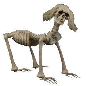 shadow the skeleton dog