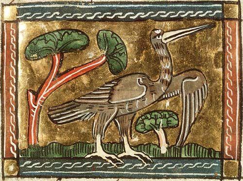 Medieval Bestiary : Bittern Gallery