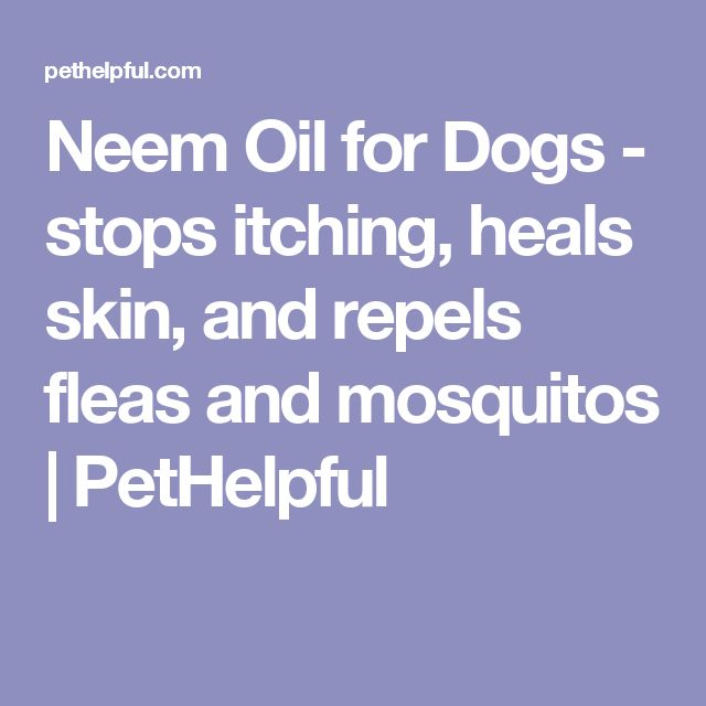 Neem Oil for Dogs - stops itching, heals skin, and repels fleas and mosquitos | PetHelpful