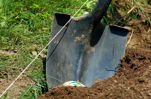 Natural Way To Get Rid Of Ants In Grass