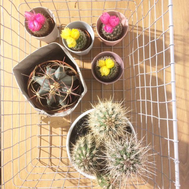 Wij kunnen niet genoeg krijgen van deze blije cactussen! En jij?