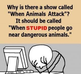 lol: Animal Planets, Funny Pics, Funny Pictures, Truths, Funny Stuff, So True, Humor Quotes, Stupid People, True Stories