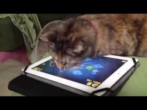 Cat Vs fruit ninja video The ultimate animal battle And the winner is https://www.youtube.com/watch?v=f-tHUy6eQ2I
