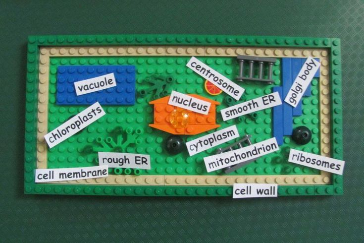 "Featured Project: ""Lego plant cell"" made by make it snappy https://diy.org/makeitsnappy/566655"