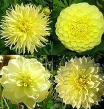 Afbeeldingsresultaat voor dahlia bloemstuk