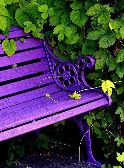 If puple flowers won't grow, I'll paint a bench :)
