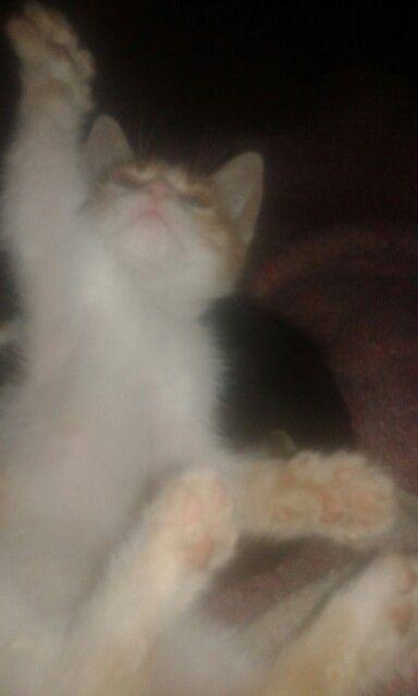 Cat I love ❤