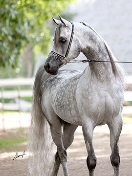 If I ever got a horse I'd get one like this and name it speckles. It gorgeous