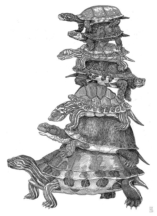 Endangered Turtles on Behance