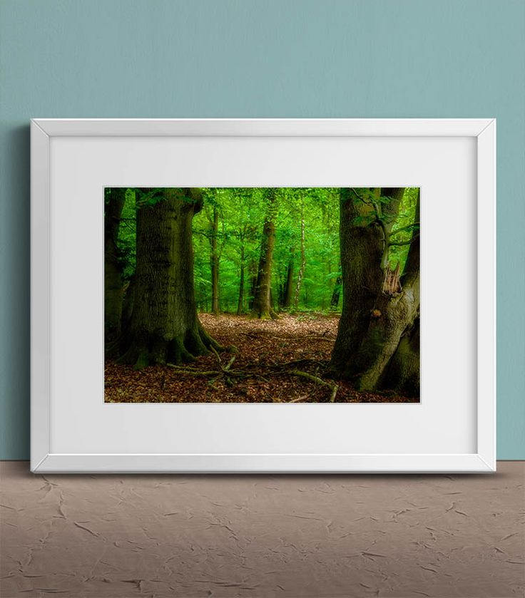 Another day in the forest by Tim Abeln Photography and Digital Art Prints. Beautiful wall decoration for your home and office. Another day in the forest with a beautiful view through the trees. #wallart #homedecor #interiordesign #canvas #artprint #forest #photography #nature