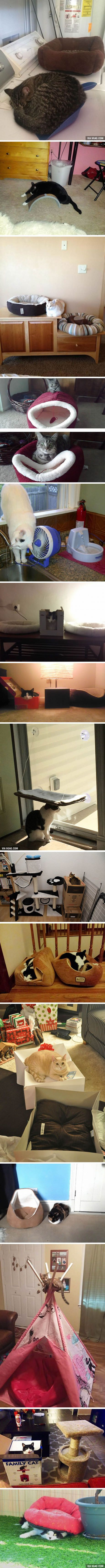 """Cats that are """"truly thankful"""" for your gifts..."""