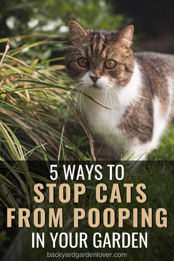 How To Stop Cats From Using My Garden As Toilet Cats