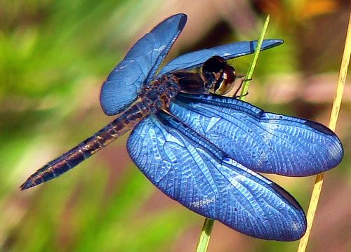 "dragonfly - they ""come back"" as something totally different than what they were when they were babies..."