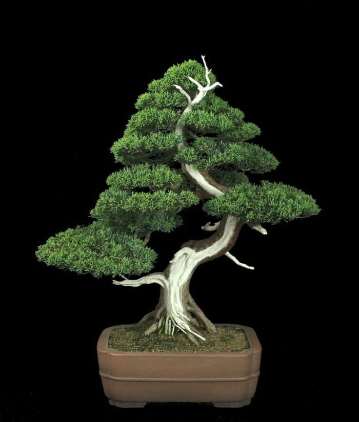 Bahawalpur Digest: Bonsai Art - Bonsai Tray Cultivation, Ancient Art Of Growing Trees, Worlds Most Famous Bonsai Trees