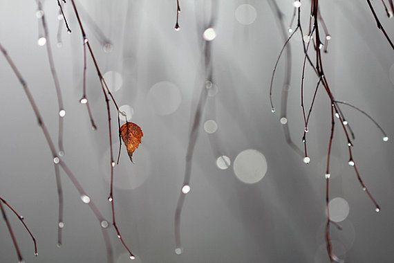 Big grey world punctured by a small orange leaf by GordanaPhoto