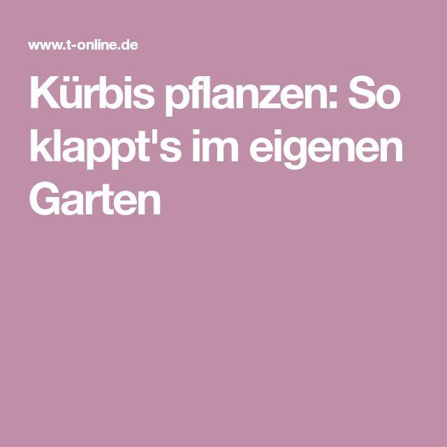 Kürbis pflanzen: So klappt's im eigenen Garten