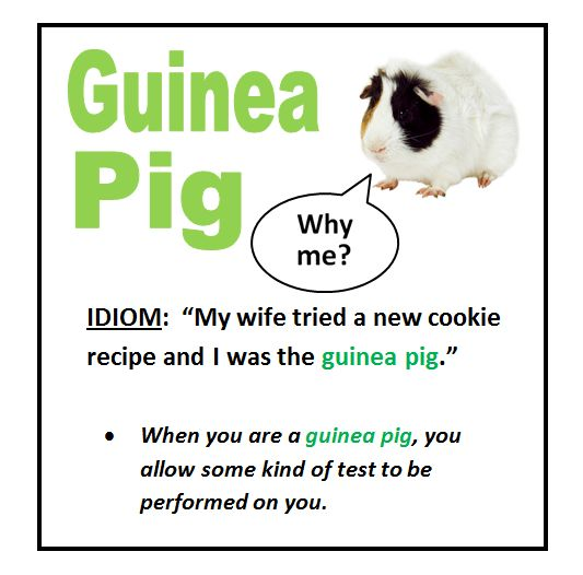 guinea pig #ELT #voc #idioms        Repinned by Chesapeake College Adult Ed. We offer free classes on the Eastern Shore of MD to help you earn your GED - H.S. Diploma or Learn English (ESL).  www.Chesapeake.edu