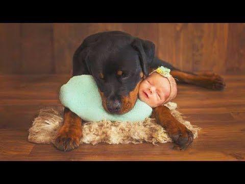 Rottweiler Hund schützt Babys & Kinder Compilation