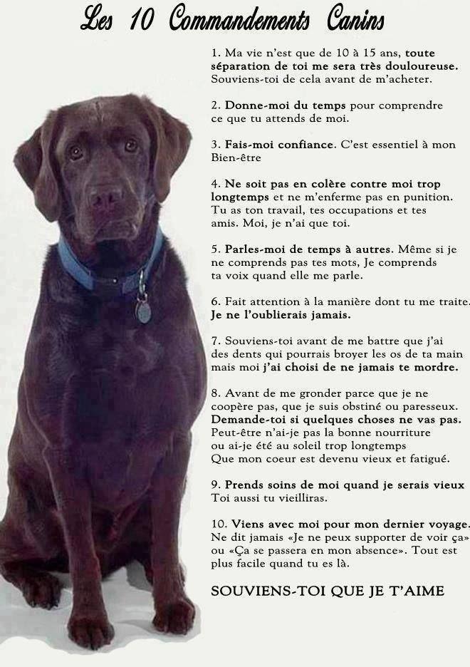 Les 10 commandements du chien