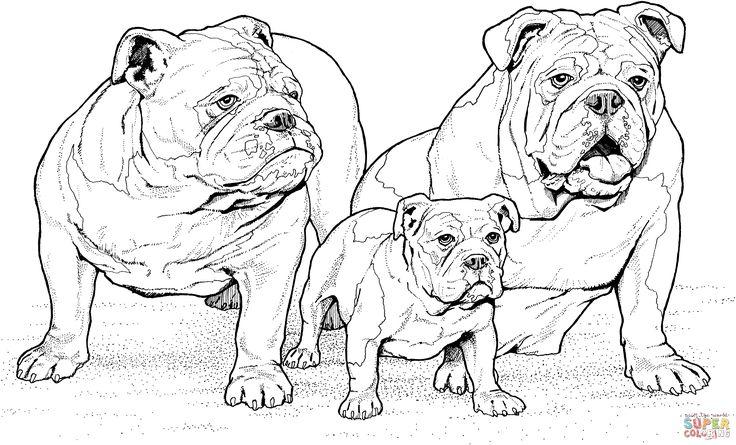 Engelsk bulldog med valp | Super Coloring