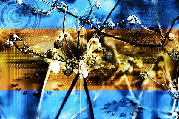 The Anemone Affect by J. Gazo-McKim