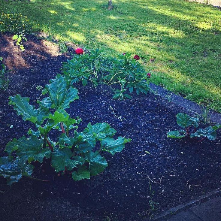 Sensationell!!! Wir haben nun Tropfleitungen verbuddelt und es klappt mehr als zufriedenstellend. Und auch die Schnecken haben noch nicht alles weg gefuttert. Die Mühe hat sich gelohnt. Es sollte nun erst mal klappen mit einem Gartentag in der Woche. _____________________ @gardena.worldwide #tropfleitung #tropfschlauch #garten #giessen #grünerdaumen #gartenarbeit #beet #pflanzbeet