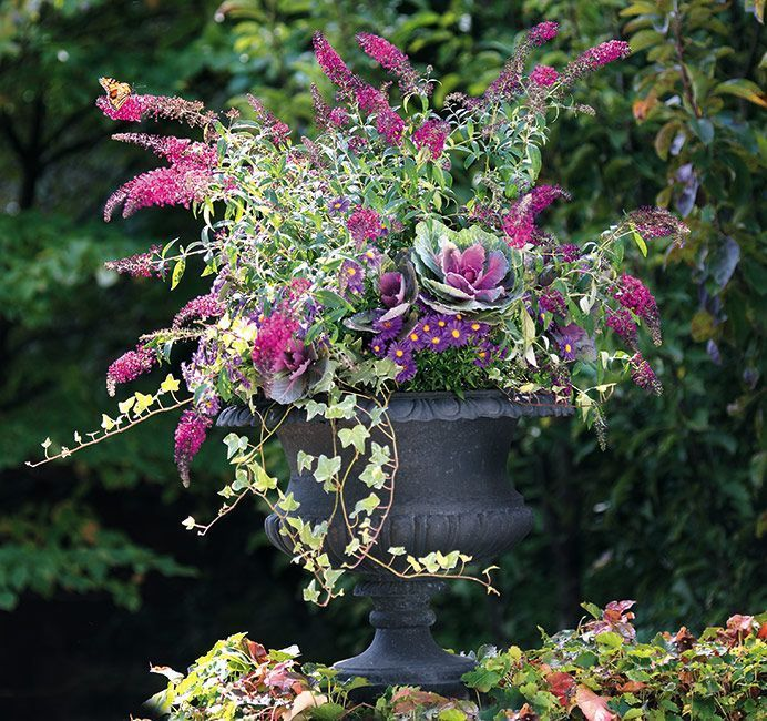 Plant Selection Ideas For Container Gardening