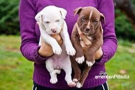 Litigando con la moglie, uccide il cucciolo scaraventandolo dal balcone :http://www.qualazampa.news/2016/11/10/litigando-con-la-moglie-uccide-il-cucciolo-scaraventandolo-dal-balcone/