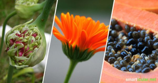 11 pflanzliche Antibiotika, die deinem Körper sanft und effektiv helfen