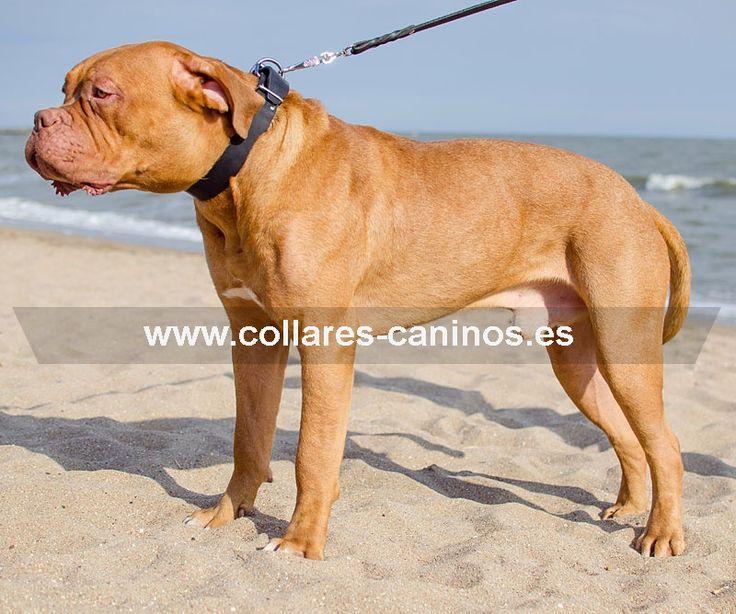 Económico collar de adiestramiento para perros grandes y fuertes Dogo de Burdeos - C4 (40 mm)