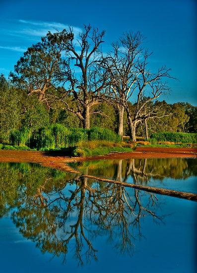Wonga Wetlands, Albury, NSW