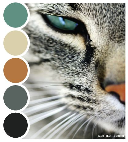 Cat color palette. Or teal and black, depending on how you want to look at it.