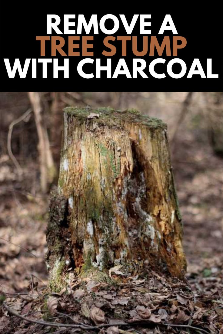 How To Remove A Tree Stump With Charcoal Comprehensive