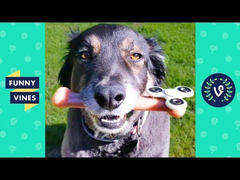 Watch TRY NOT TO LAUGH or GRIN - Funny Animals Vines Compilation 2017 | Funny Vines Videos Video online and send it to your Friends.