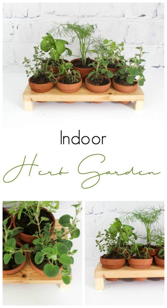 Make your own indoor countertop herb garden! Use Terra Cotta pots to keep your herbs close by all summer long! This simple DIY project includes the FREE build plans. Love this modern planter.