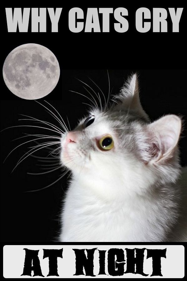 Why do cats cry at night? What is that old superstition? Or