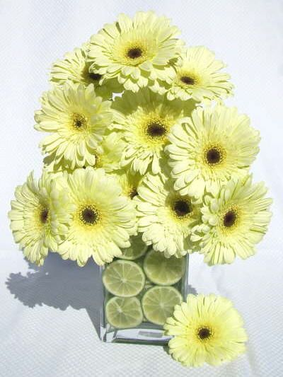 Yellow Gerbers with cut limes in the vase
